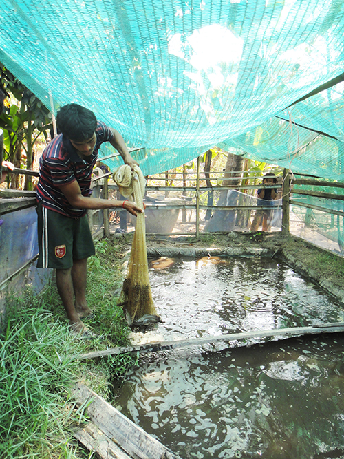 History Agriculture Fish Farming