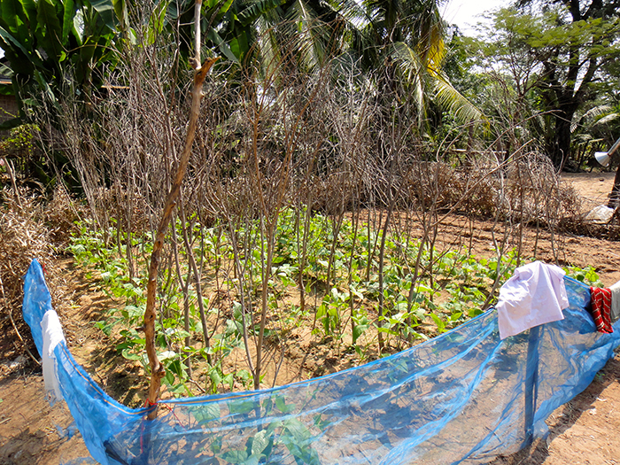 Rural Cambodia Food Security Agriculture Farming Gardening 6