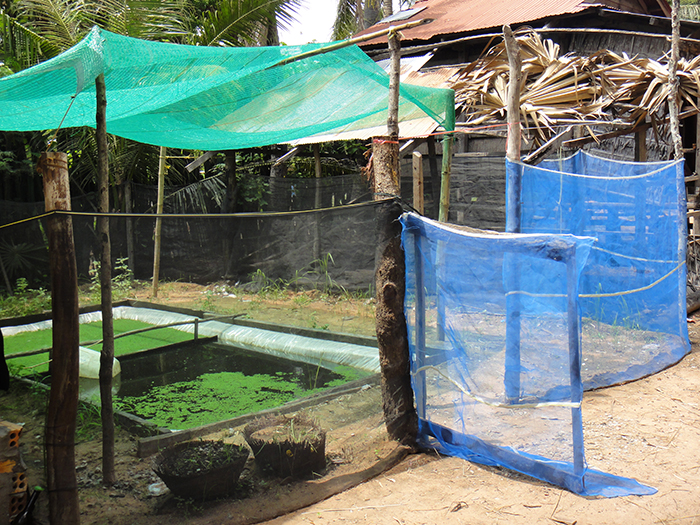 Rural cambodia fish farm agriculture aquaponics sustainable 2