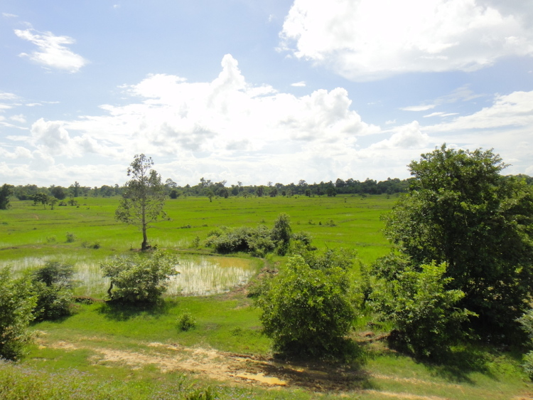 Community First - Aquaponics and Fish Farming in Cambodia  - Rice Fields